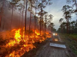 A wildfire caused by lightning spreads through the south side of the Goethe State Forest in Florida..